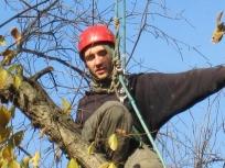 alex_treepruning