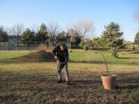 treeplanting_2_projects